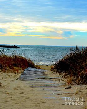 Boardwalk in Wellfleet Cape Cod by Phil Hawn