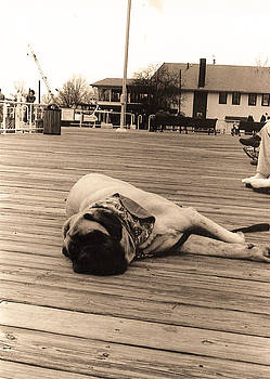 Leslie Cruz - Boardwalk Mastiff