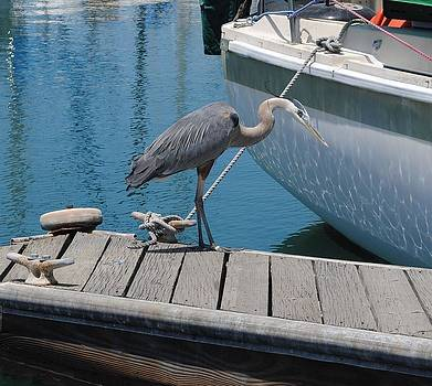 Boat and Heron by Jill Baum