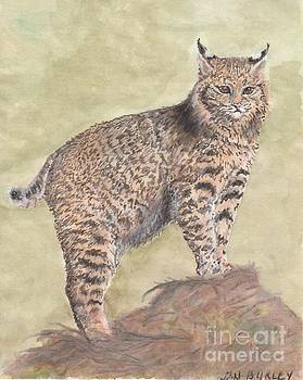 Bobcat With An Attitude by Jan Burley Hunt