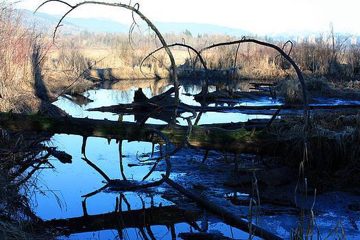 Bog at Burnaby Lake by Gerry Bates