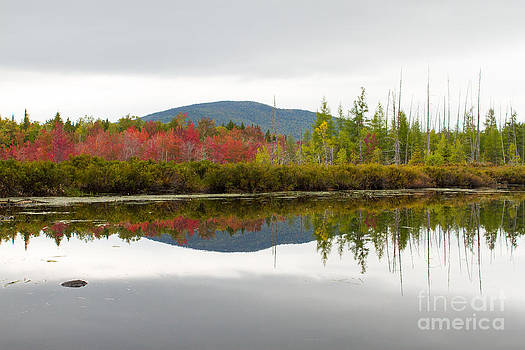 Bog Foliage by Denise Lilly