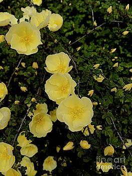 Bogue Blossom by Joseph Yarbrough