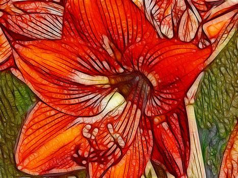 Maria Holmes - Bold Red Amaryllis