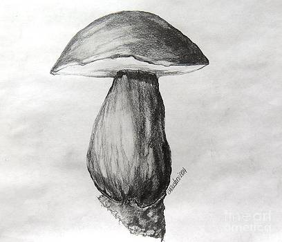 Boletus pinophilus - Valtata forest by Valentin Milushev
