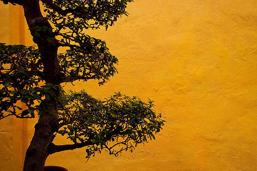 Bonsai and orange wall by Calvin Chan