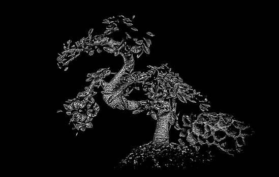 Bonsai Dragon by Jonica Hall