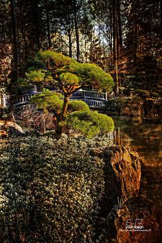 Bonsai Tree by Dan Quam