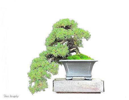 Bonsai Tree by Dave Hrusecky