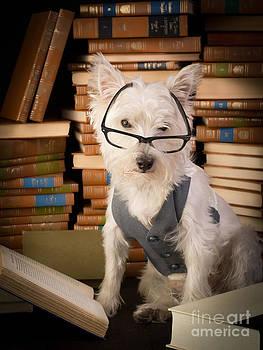 Edward Fielding - Bookworm Dog