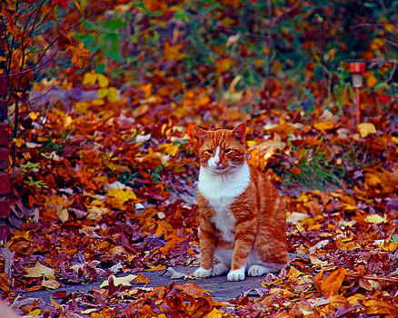 Boots in the leaves by Andy Lawless