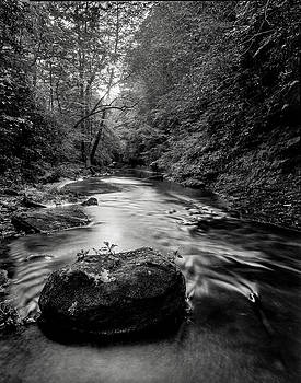 Borden Creek Bankhead National Forest by Benjamin King