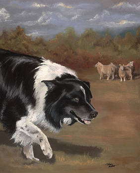 Border collie herding by Terry Albert