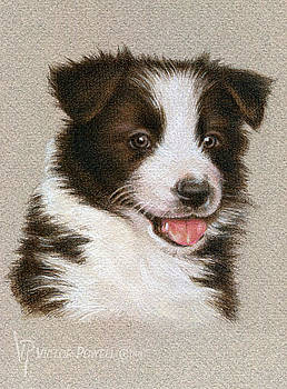 Border Collie Puppy Portrait by Victor Powell