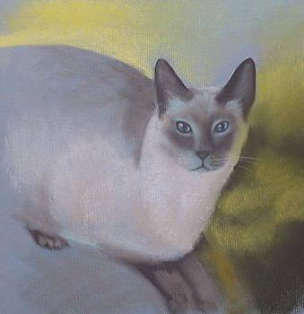 Boris Softly by Sherri Anderson