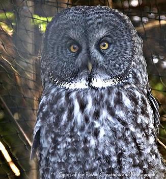 Boris Von Owl by Dawna Raven Sky