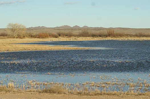 James Gay - Bosque Pond