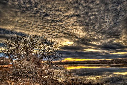 Bosque Skies by Helene Kobelnyk