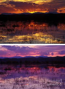 Steven Ralser - Bosque sunsets