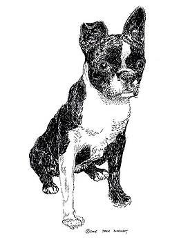 Jack Pumphrey - Boston Bull Terrier