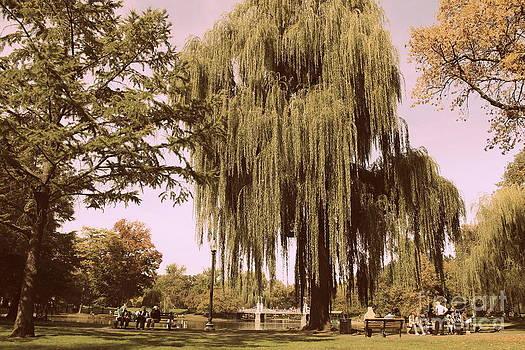 Boston Public Garden by Ellen Ryan