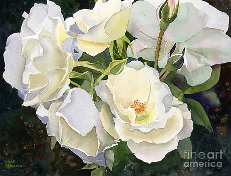 Boston Roses by Hollis Machala