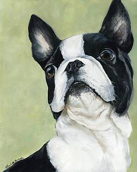 Boston Terrier by Charlotte Yealey