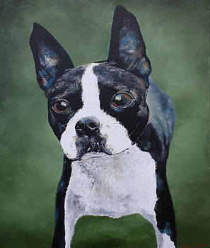 Boston Terrier by Katrina Nixon