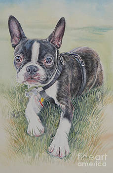 Boston Terrier Puppy by Gail Dolphin
