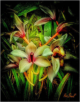 Botanical Dream #2 by Ron Pearl