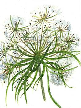 Botanical Theme-Queen Anne's lace by Garima Srivastava