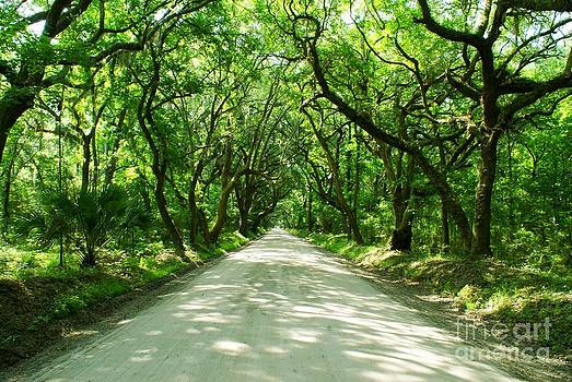 Botany Bay Road by Adam Dowling