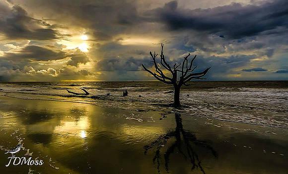 Botney Bay by Janet Moss