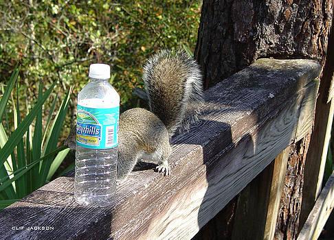 Bottleneck Squirrel by Clif Jackson