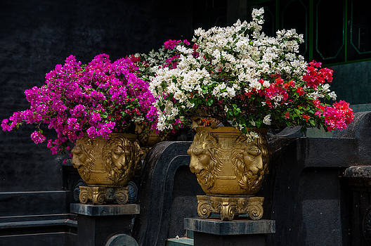 Jenny Rainbow - Bougainvillea at the Entrance of Golden Temple in Dambulla