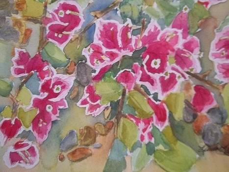 Bougainvillea by Linda L Stinson