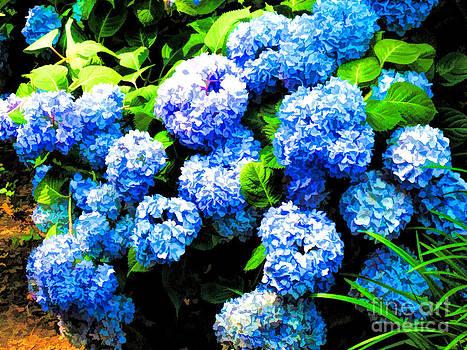 Anne Ferguson - Bountiful Blue Hydrangea