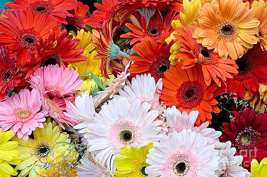 Oscar Gutierrez - Bouquet of gerbera daisies