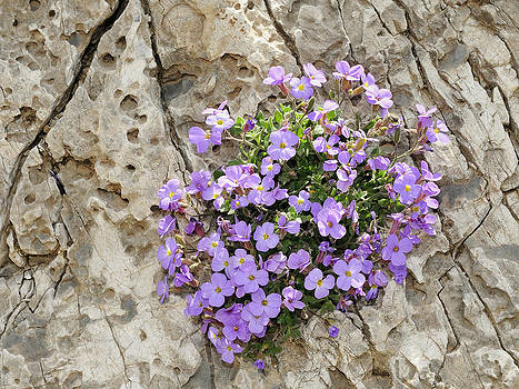 Bouquet on the rocks by Anastasios Sakoulis