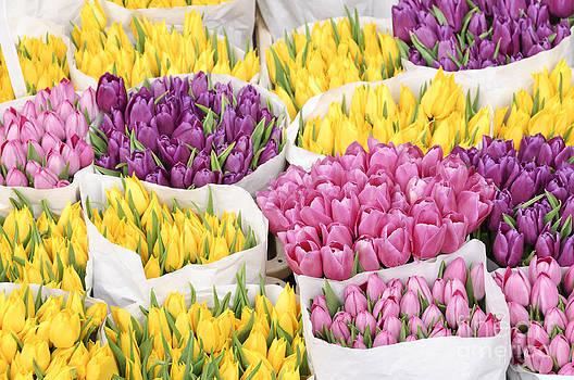 Oscar Gutierrez - Bouquets of tulip flowers at a flower market