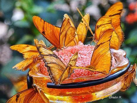 Bowl of butterflies by Nelin Reisman