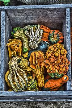 Box Of Gourds by Thomas  MacPherson Jr