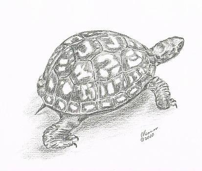 Box Turtle by Joann Renner