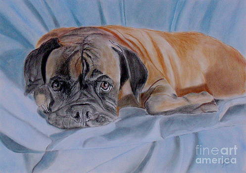 Nina, the boxer by Cybele Chaves