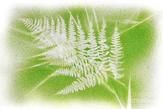 Jo Ann Snover - Bracken and grass shapes