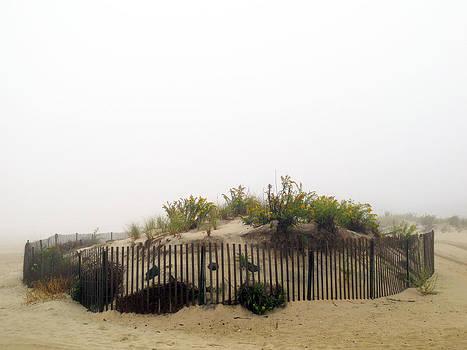 Bradley Beach Sand Dune by Anastasia Pleasant
