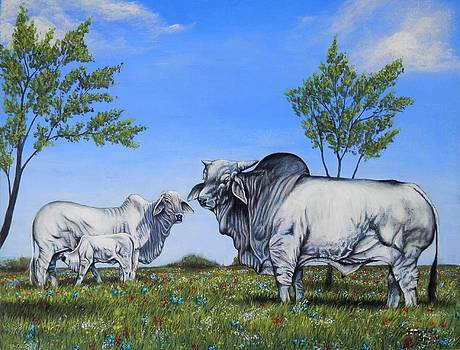 Brahman Cattle by Amanda Hukill
