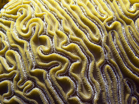 Matt Swinden - Brain Coral
