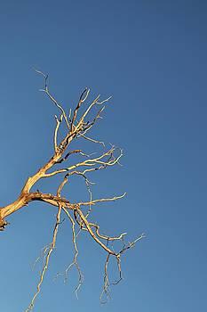 Randal Bruck - Branches