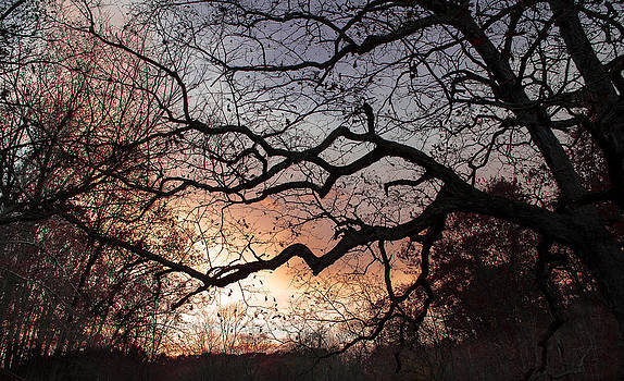 Branches by Wayne King